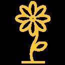 Kingston First_flower-yellow-500x500